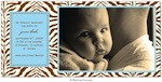 Zahara Zebra Blue Photo Card-whitney english, photo card, blue, zebra